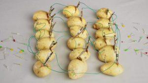 Способ соединения картофелин для получения электричества